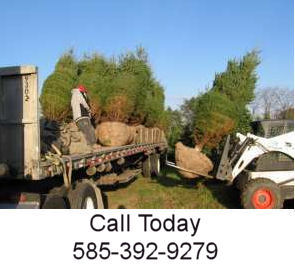 Transplanting Trees Services